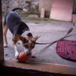 Ringo tries to lure me into playing catch ball again (Photo by Venus Liwanag)